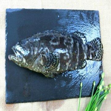 龍虎石斑魚整尾(500g)