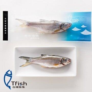 產銷履歷午仔魚 2入